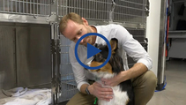 See why some vets ONLY offer lap spays